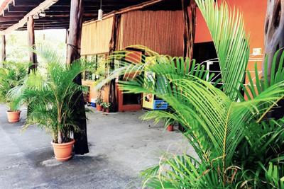 tamarindo surf hostel