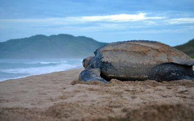 Tamarindo Day Trip: Turtle Tour to Las Baulas National Marine Park