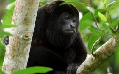 "Costa Rican Wildlife Watching: The ""Big Five"""