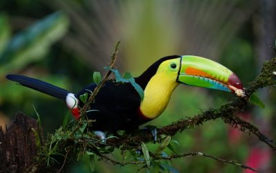 Big Five: More Costa Rican Animals You Can't Wait to Spot