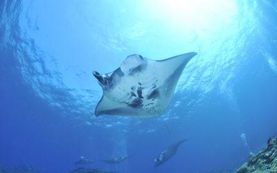 Tamarindo Day Trip: Snorkeling & Scuba Diving the Catalina Islands